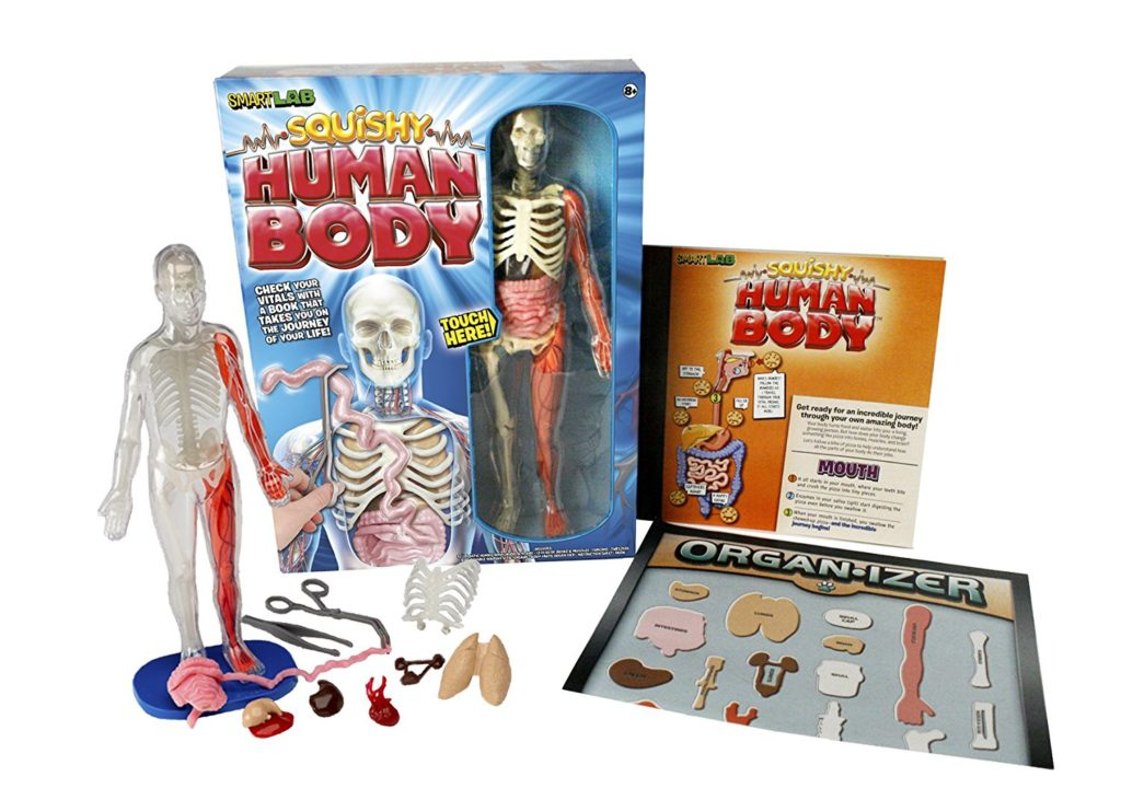 21 Super Fun Human Body Activities And Experiments For Kids The